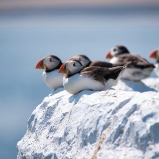 Great ways to go bird spotting in Iceland